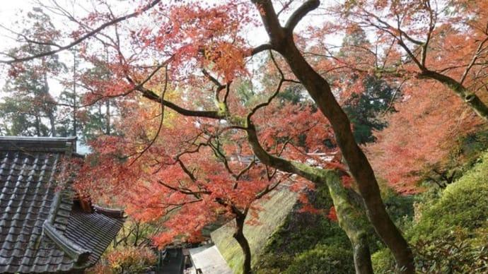 2018年11月17日 佐賀県基山の大興善寺の紅葉