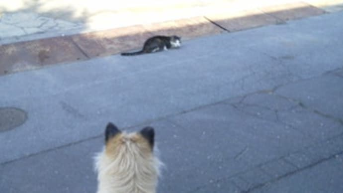 至近距離でネコさん