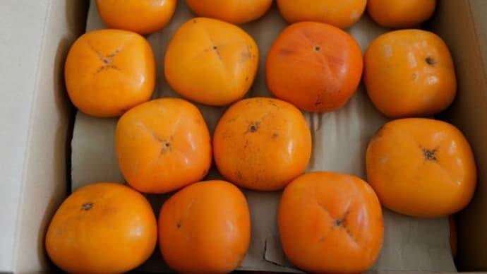 和歌山県から柿が届きました  平核無柿(ひらたねなしがき)