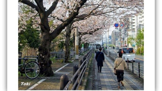 JR東淀川駅前の桜
