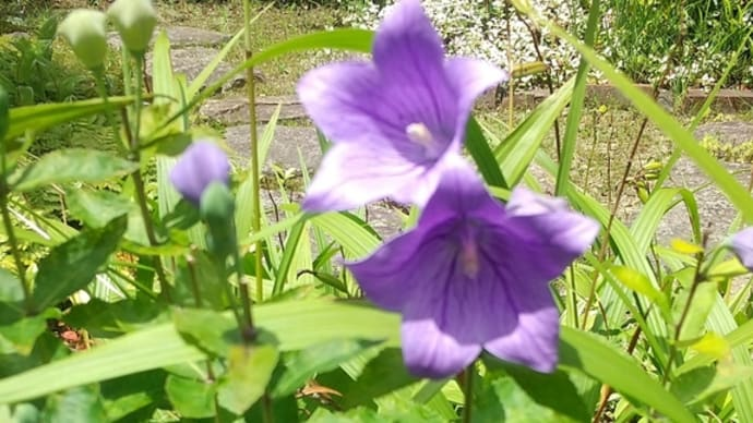 7月24日の花