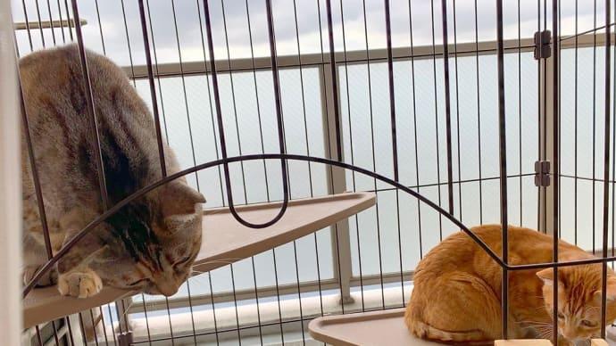 曇り空と猫。