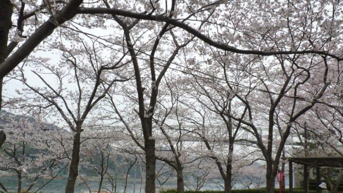 今日の台場公園(境港)~大山~清水寺(安来市)
