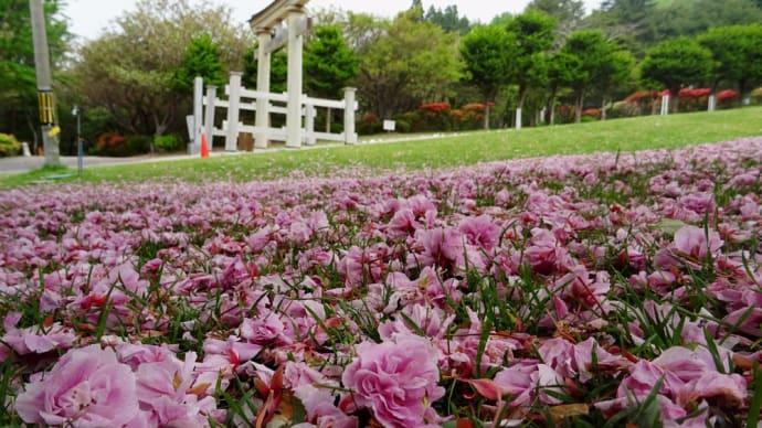 去る桜・石崎地主海神社 2017年5月30日