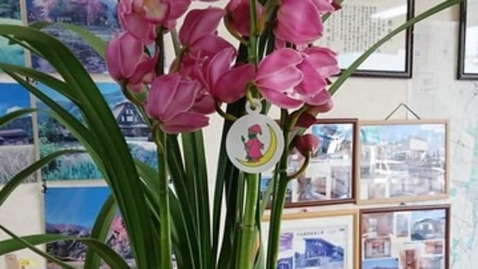 年末のご挨拶に蘭の花頂きました