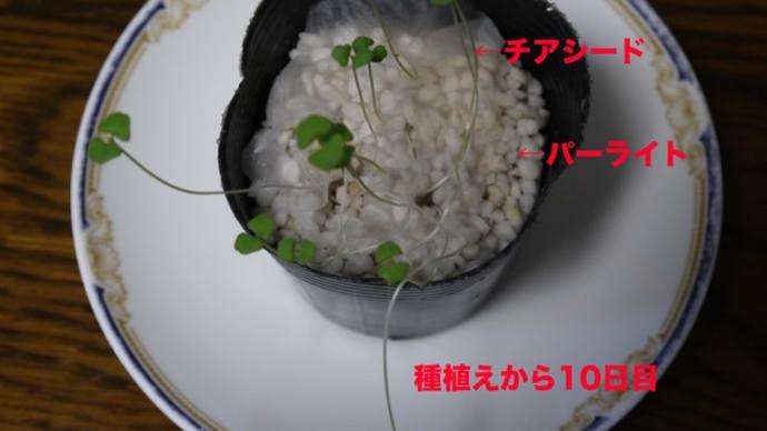 室内での水耕菜園