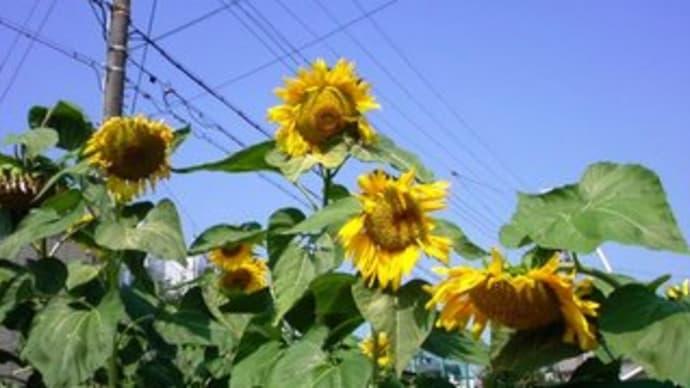 夏真っ盛り!!