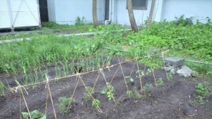 2010 農園日記22