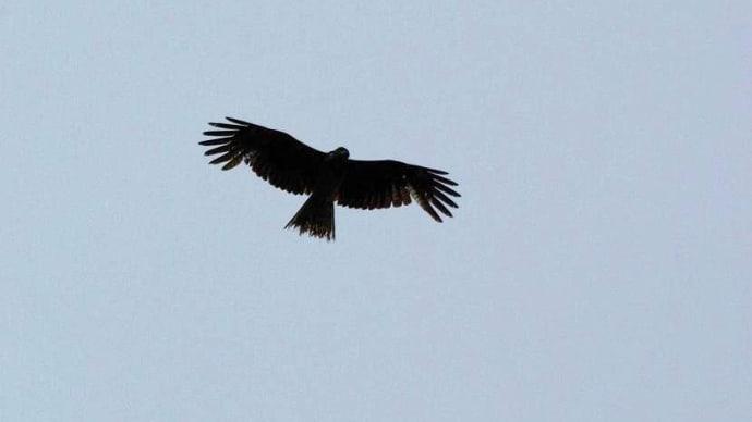 鳥がくるりと空に舞い
