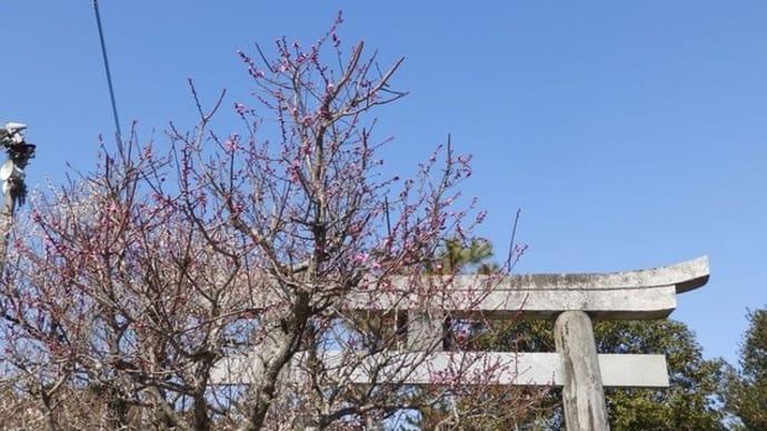 綱敷天満宮の梅祭り