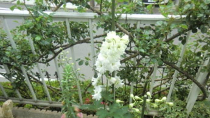 open garden 2014 in midoriyama