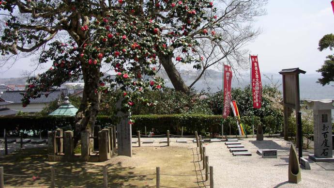 満願寺の珠椿