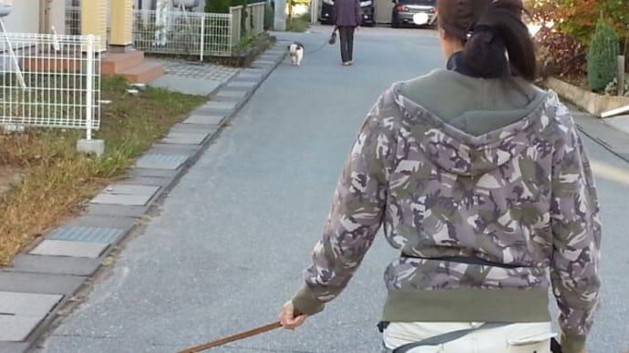 ハナちゃんを先導にお散歩