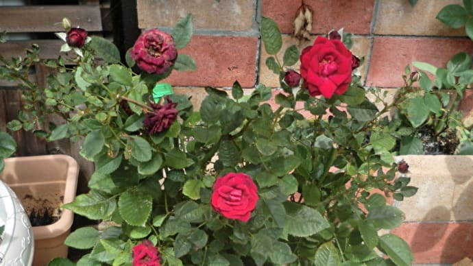 街角に咲く花✿街角ぶらり旅07-26