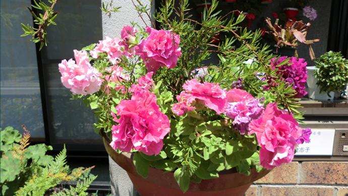 花飾りの家📷街角ぶらり旅