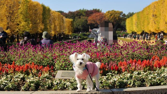 金色の昭和記念公園へ(前編)