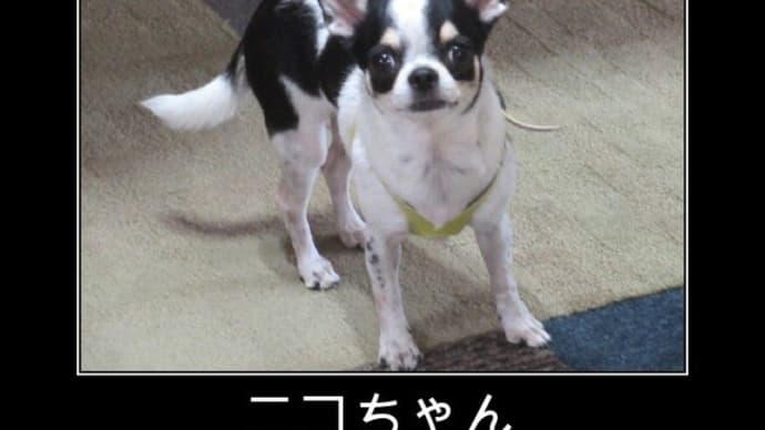 20/09/21 入園 ニコちゃん