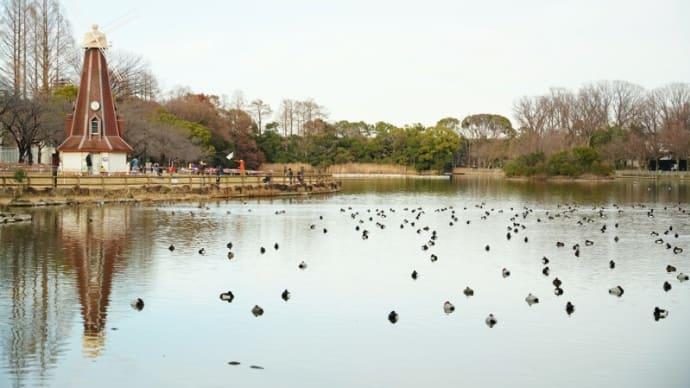 浮間公園の野鳥 前編(2021.1.11 撮影)