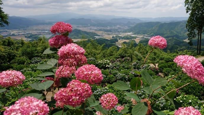 天空のアジサイ寺~佐賀まで行って来ました