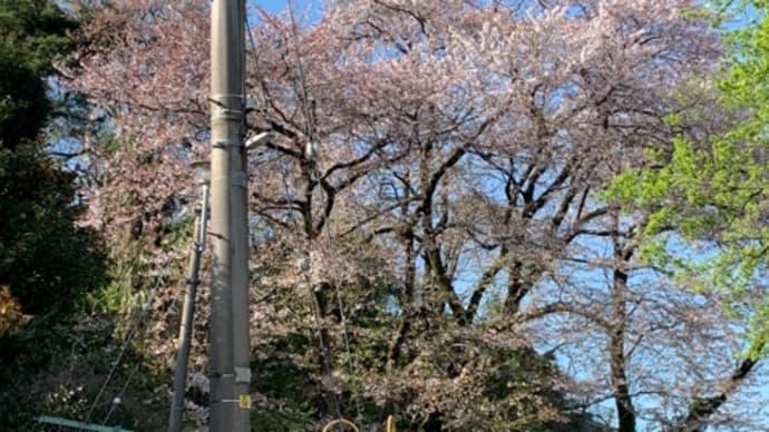 いよいよ葉桜に