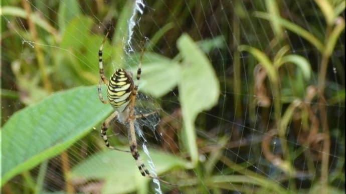 蜘蛛 3 種 です。