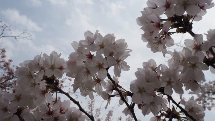 お花見ベストスタイル