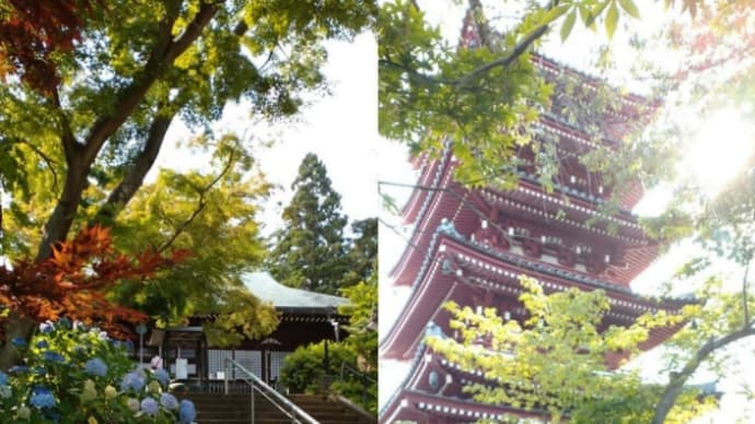 あぢさい寺 ~ 松戸散歩 (本土寺)