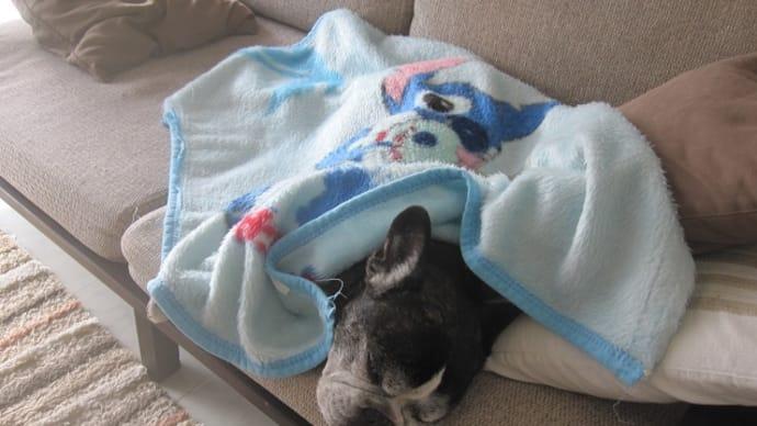 隊長用の毛布が登場。