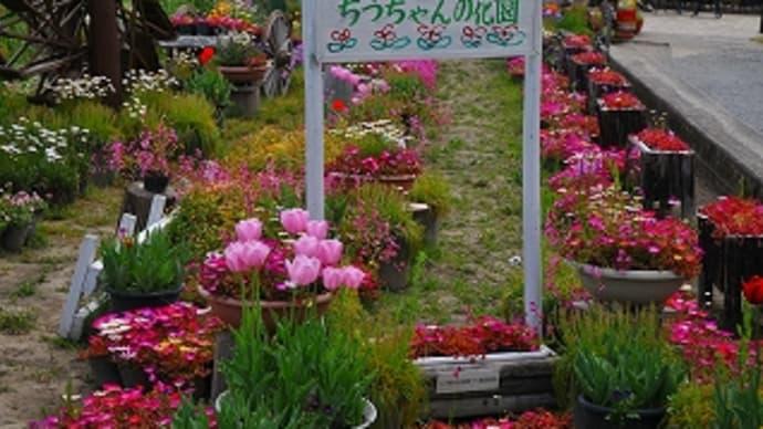 ちづちゃんの花園