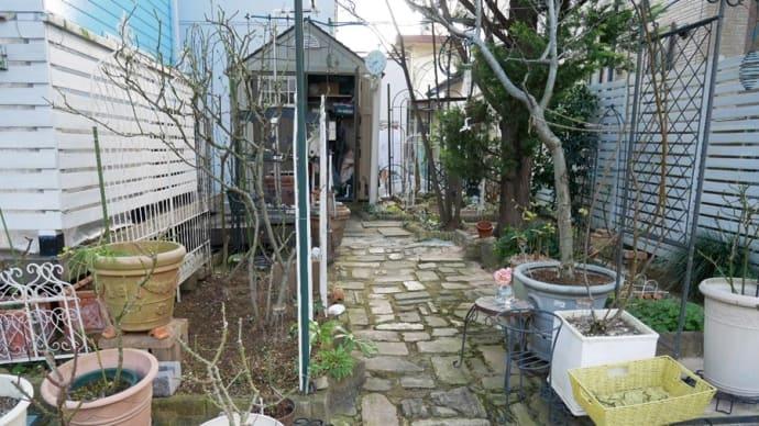 1月12日の庭<バラ強剪定>