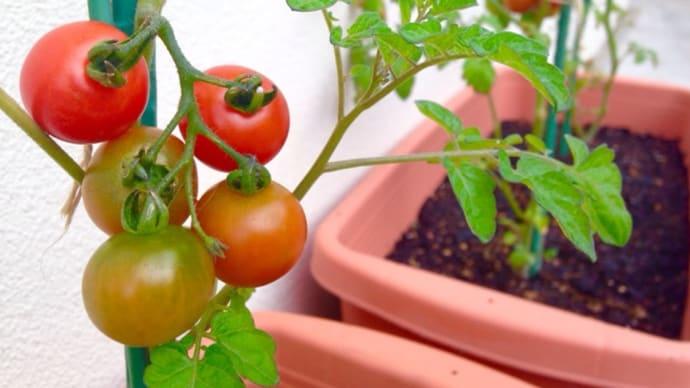 トマトがゴロゴロスパゲティー