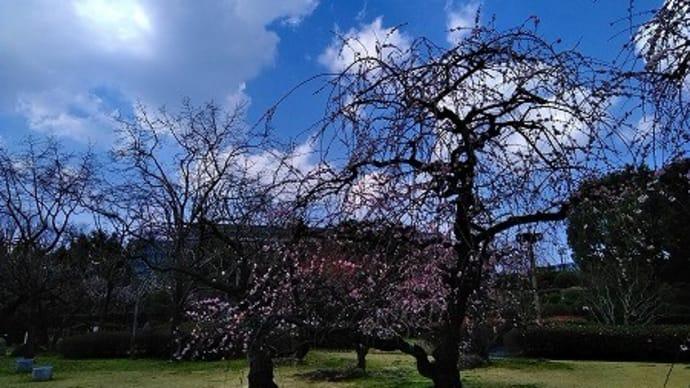 暑い日差し春間近です
