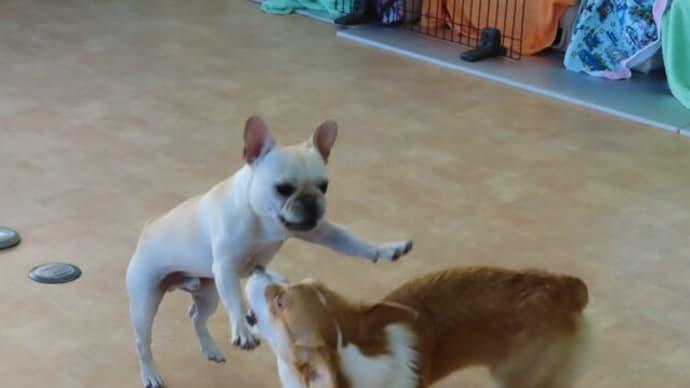 《愛犬のお食事セミナー》午前の部・午後の部ともに締め切りました。【ALOHA塾】  犬のしつけ教室@アロハドギー