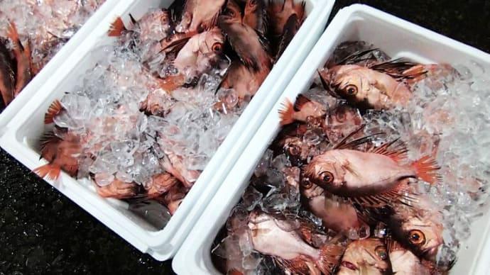 年に2回だけ眩しくなる小田原魚市場|JSフードシステム