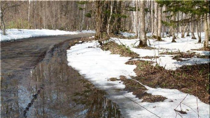 雪解けの森で