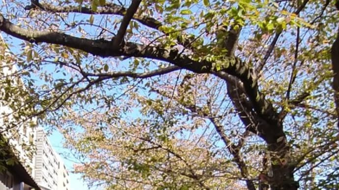 「きらきらひかる」の京都