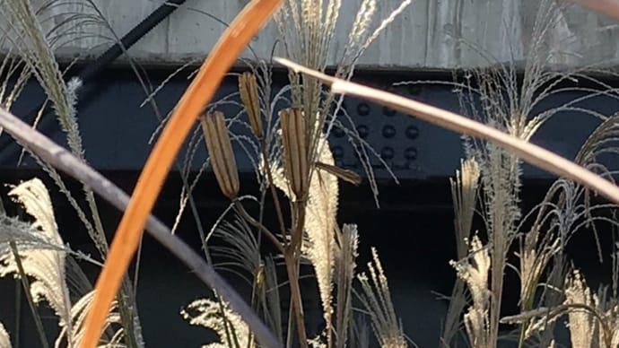 荒川河口コース+全日本実業団女子駅伝TV観戦 20/11/22