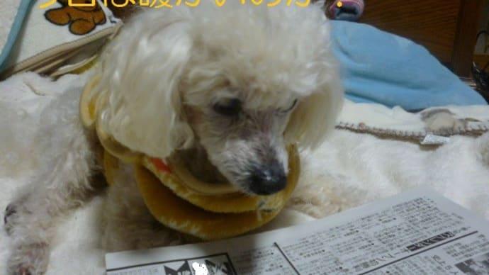 今日は春のような東京…明日からは一転真冬…老犬ラスさん何を思う? (-_-)ウーム