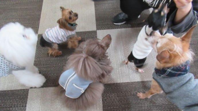 20/01/17 犬の幼稚園BuddyDog