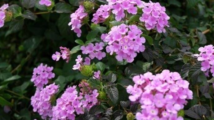 荒牧バラ公園の他の花と昆陽寺
