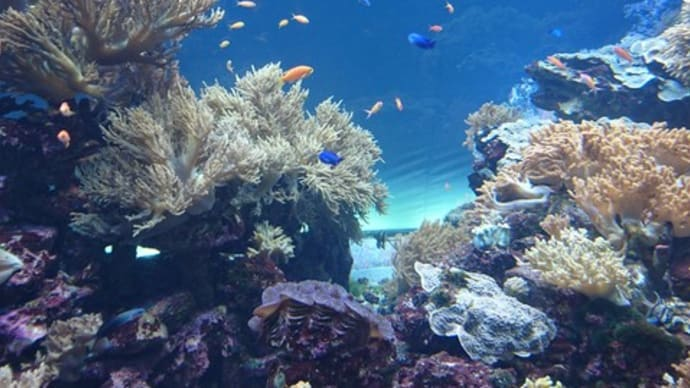 池袋・サンシャイン水族館