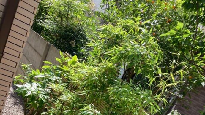 横浜市戸塚区の個人邸のクロチクの植栽工事。