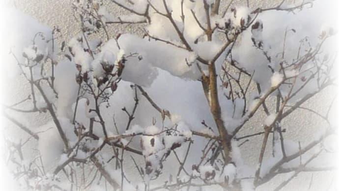 雪とニャン