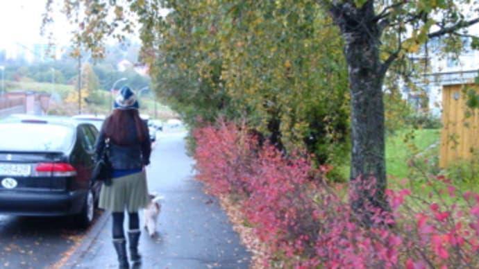 ノルウェー滞在記☆Part.2 オスロで暮らす・食&ロンニャのお散歩編