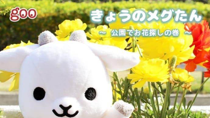 きょうのメグたん ~公園でお花探しの巻~