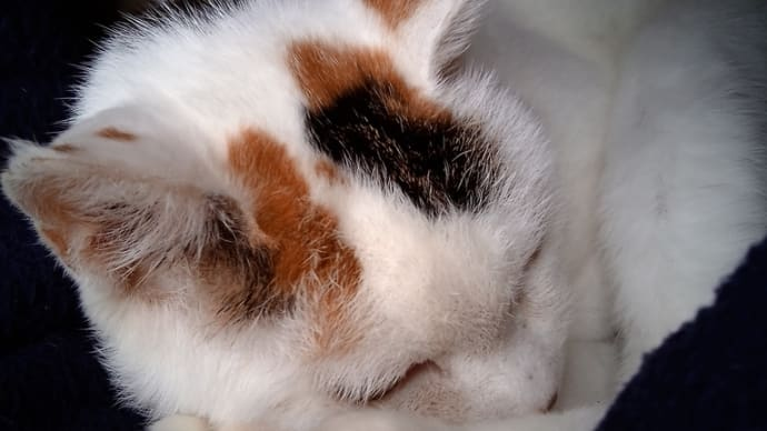 うちの猫も腎臓病が発覚