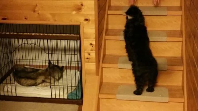 階段を上れないエン