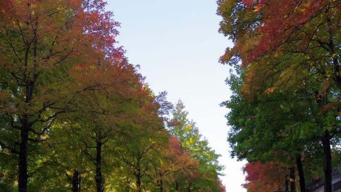 秋色に染まる朝