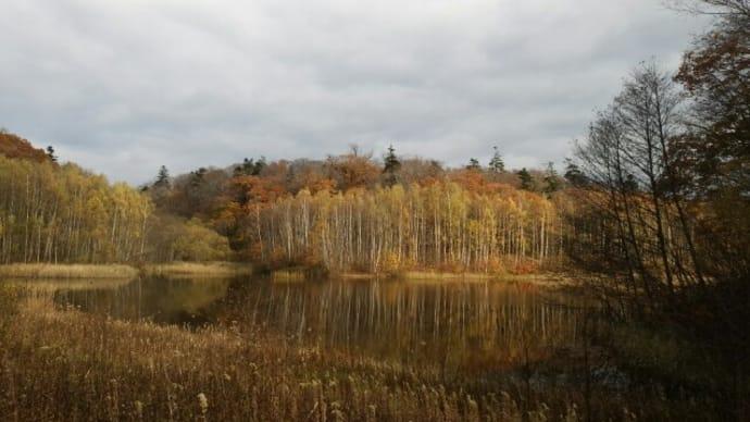 ただ今現在の瑞穂の池です