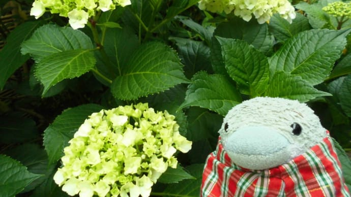 いろいろな花が咲きました。